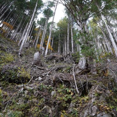 加子母の森に木を植える